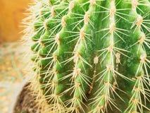 Złota balowa kaktusowa tekstura Zdjęcie Royalty Free