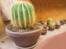 Złota balowa kaktusowa tekstura Zdjęcia Stock