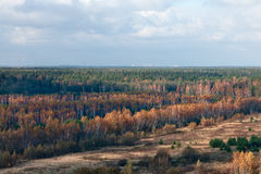 Złota jesieni linia horyzontu Zdjęcia Stock
