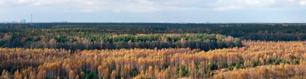 Złota jesieni linia horyzontu Obraz Royalty Free