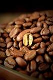 Złota piec kawowa fasola Obraz Stock
