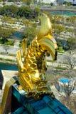 Złota ryba przy dachem obraz royalty free