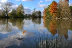 złota rybka jumping zdjęcia stock