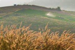 Złota trawa w górze Obraz Stock