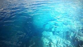 złote czochr wód powierzchniowych Obrazy Stock