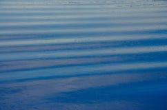 złote czochr wód powierzchniowych Fotografia Stock