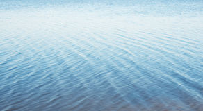 złote czochr wód powierzchniowych Zdjęcie Stock
