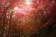 Złotego spadku jesienny las Fotografia Royalty Free