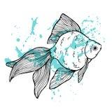 Złoto ryba Zdjęcie Stock