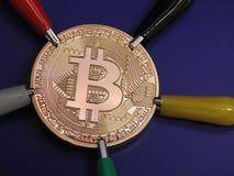 Złoty Bitcoin z aligator klamerkami Obraz Royalty Free