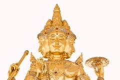 Złoty Brahma Obrazy Royalty Free
