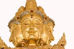 Złoty Brahma Obraz Stock
