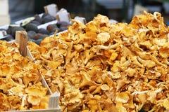 Złoty Chanterelle grzyb fotografia stock