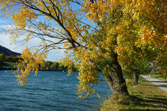 Złoty drzewo Fotografia Stock