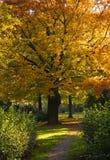 złoty drzewo Obrazy Stock
