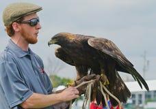Złoty Eagle trzyma treserem (Aquila chrysaetos) Zdjęcia Royalty Free