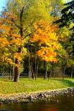 Złoty jesieni drzewo, rzeka i obraz stock