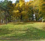 Złoty jesieni klonowego drzewa wzgórza krajobraz Fotografia Stock