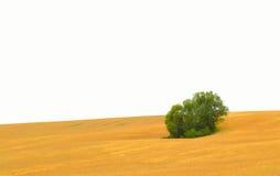 złoty kukurydzany pole Obraz Royalty Free