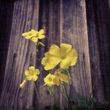 złoty kwiat Obrazy Royalty Free