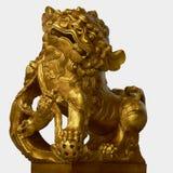 złoty lew Zdjęcia Royalty Free