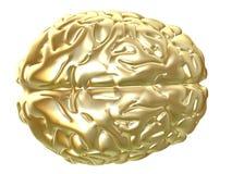 złoty mózgu Obrazy Royalty Free