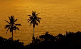 złoty morze Zdjęcie Stock