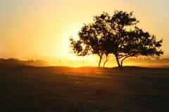 złoty pola zdjęcie stock