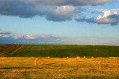 Złoty pszeniczny pole obraz royalty free