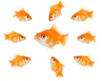 złoty ryb Zdjęcia Royalty Free