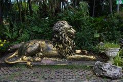 Złoty stalowy lew Zdjęcie Stock