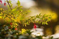 Z pięknym bocznym światłem słonecznym prosty kwiat Obrazy Stock