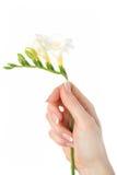 Z pięknym francuskim manicure'em piękna ręka Fotografia Stock