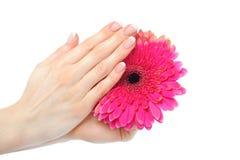 Z pięknym francuskim manicure'em piękna ręka Zdjęcie Royalty Free