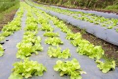 Z plastikowym filmem warzywo ogród Fotografia Royalty Free