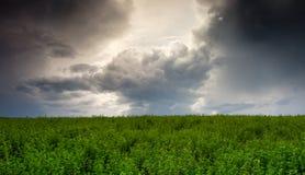 Zła pogoda przychodzi na zielonym polu Zdjęcie Stock