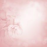 Z różanymi kwiatami różowy tło Fotografia Royalty Free