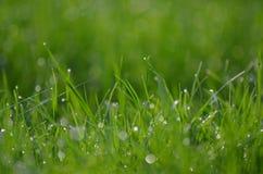Z raindrops zielona trawa Fotografia Stock