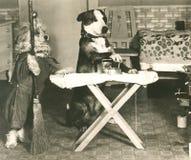 Z rodziny psów obowiązek domowy obraz stock