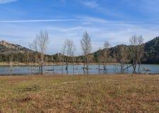Z rzędu nawadnia jezioro tonący w Fotografia Stock