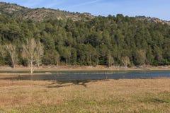 Z rzędu nawadnia jezioro tonący w Obrazy Stock