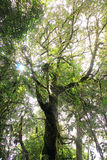 Z słońca światłem wysoki drzewo Obraz Royalty Free