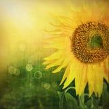 Z słonecznikiem abstrakcjonistyczny kwiecisty tło Obraz Stock
