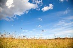 Z suchym polem wiejski krajobraz Zdjęcia Royalty Free