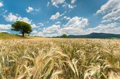 Z uprawą natura piękny krajobraz Zdjęcie Royalty Free