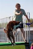 z właściciela psi chwytów skoki ramp zrzuconego zabawka Zdjęcie Royalty Free