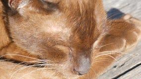 Z włosami kotów kłamstwa z zamkniętymi oczami zamknięty kwiatu komarnicy macro target4726_0_ zamknięty Nadzwyczajna wełna błyska  zbiory
