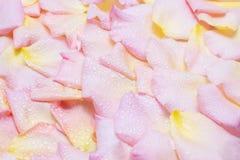 Z wodnymi kroplami różani płatki Fotografia Stock