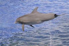 Z wody delfinu doskakiwanie Zdjęcie Stock