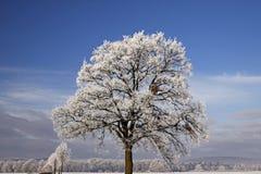 zły Germany hoarfrost laer drzewo Obrazy Royalty Free